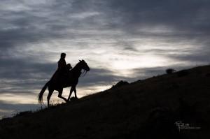 photo-cheval-les-exiles